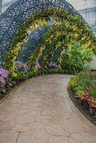 Garden yellow orchid and tree tunnel walkway in park. Royalty Free Stock Photos