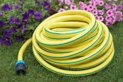 Garden yellow plastic hose-pipe. Plastic hose-pipe in front pink flowers on a grass stock photography