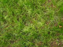 Green grass in the garden. stock images