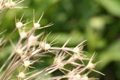 garden2 图库摄影