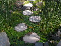 Gardenbasin with a nice green plants. Garden pond with water, goldfish and green plantes like white water-lilys an d step stones to cros the pond. We are in Stock Image