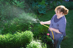 Gardener. Woman watering garden in late afternoon Stock Photography