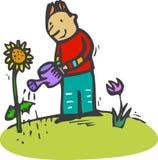 Gardener. Man watering his sunflower in the garden Stock Images