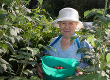 The gardener Royalty Free Stock Photo