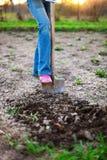 gardener imagens de stock royalty free