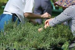 Gardener Royalty Free Stock Photography