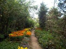 gardener foto de stock royalty free