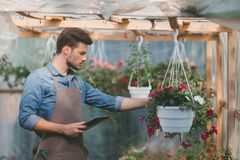 Gardener in apron using tablet while checking plants in greenhouse. Side view of gardener in apron using tablet while checking plants in greenhouse Stock Images