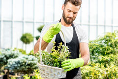 Gardener with a basket full of plants Stock Photos