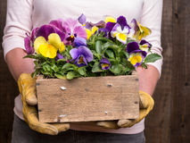 Gardener with box of flowers stock images