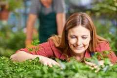 Gardener breeding plants in nursery. Smiling female gardener breeding plants in a nursery stock photo