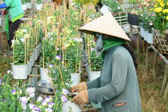 Gardener care for the flowers in their garden Stock Images