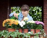Gardener caring for plants in pots Stock Image