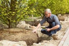 Gardener checks tree roots in garden shop stock images