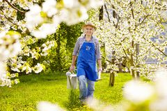 Gardener cherry tree watering can spade South Tirol Stock Image