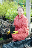 Gardener chooses bush sprouts. Female gardener chooses bush sprouts at market Stock Photography