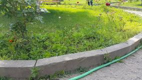 Gardener city park with a hose watering flowers stock video
