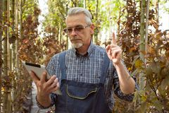 Gardener with a clipboard in his hands. Genetically modified plants royalty free stock photos