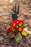 Gardener cultivating flowers stock photography