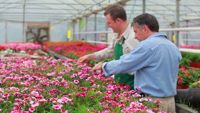 Gardener and customer standing at the greenhouse stock video