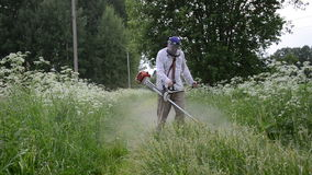 Gardener cut grass. Worker man cut trim mow wet grass after rain on June 10, 2012 in Birzai, Lithuania. Water dew drops rise from meadow stock video