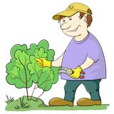 Gardener cuts a bush. Man gardener works in a garden, cuts a bush with secateurs Royalty Free Stock Images
