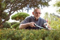 Gardener cuts a decorative shrub shears stock photos
