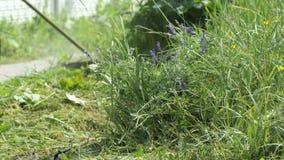 Gardener cuts a grass using a lawnmower outdoors stock video