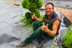 Gardener cuts a thuja or beech tree in shape. stock photography