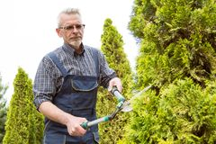 The gardener cuts the trees shears royalty free stock photography