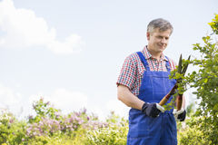Gardener cutting branches at plant nursery Royalty Free Stock Photo