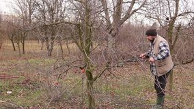 Gardener is cutting branches, pruning fruit trees with long shears in the orchard. Farmer is pruning branches of fruit trees in orchard using long loppers at stock footage