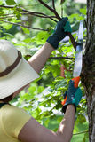 Gardener cutting branches Royalty Free Stock Image