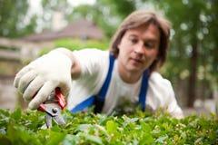 Gardener cutting a bush. Diligent gardener cutting a bush Stock Images
