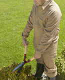 Gardener cutting a bush with scissors Stock Images