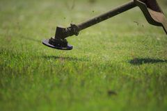 The gardener cutting grass by lawn mower Stock Image