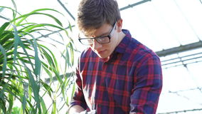 Gardener cutting green tree 4K stock footage