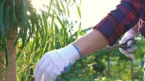Gardener cutting green tree 4K stock video footage