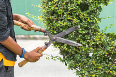 Gardener cutting a hedge in the garden Stock Image