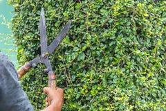 Gardener cutting a hedge in the garden Royalty Free Stock Photos