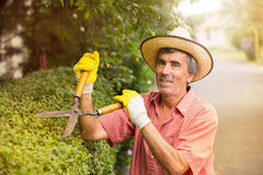 Gardener cutting a hedge with a garden pruner Stock Images