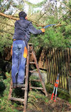Gardener cutting tree, cleanup after storm Royalty Free Stock Image