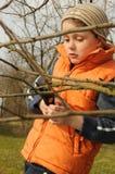 Gardener cutting tree Royalty Free Stock Photo
