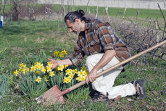 Gardener with daffodil Stock Photos