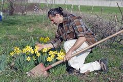 Gardener with daffodil Stock Photos