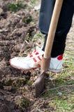Gardener digging Royalty Free Stock Photo