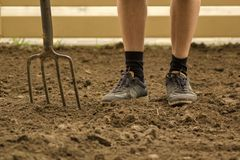 Gardener digging with fork in the garden. Soil preparing for planting in spring. Selective focused royalty free stock photo