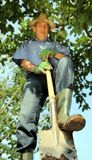 Gardener digging with spade Royalty Free Stock Photo