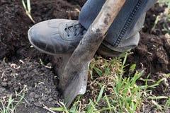Gardener digging with spade in garden Royalty Free Stock Photos