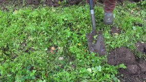 Gardener digging up earth  with ecological green fertilizer. Mustard plant stock video